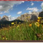 fiori e monti